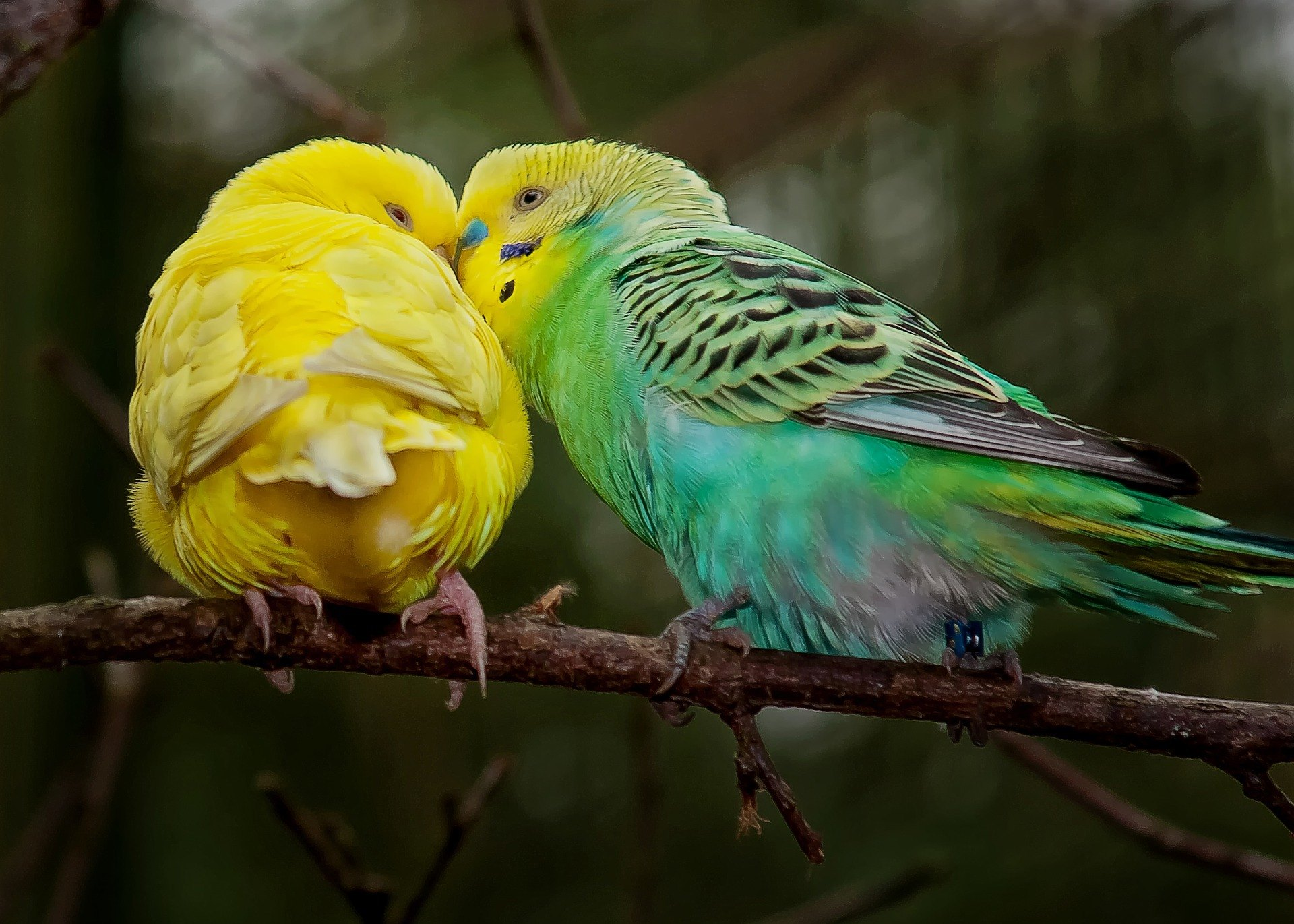 singing may have developed in monogamous species